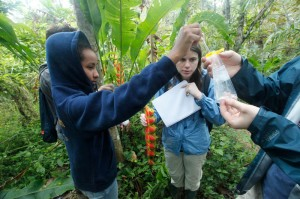 Collecting water samples from the Heliconia flowers