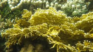 Pete's reef