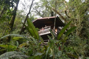 Los Quetzales, Cabin the forest