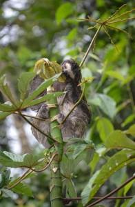 Sloth-day-1-ITEC